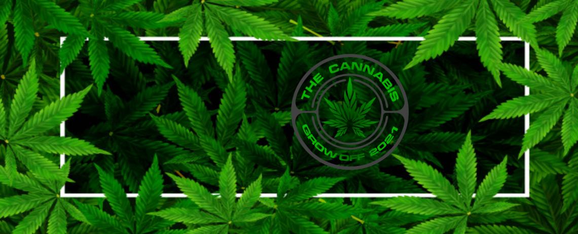 The Cannabis Grow Off 2021