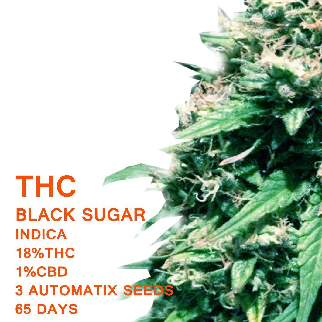 Black Sugar | SeedWorx Laboratories