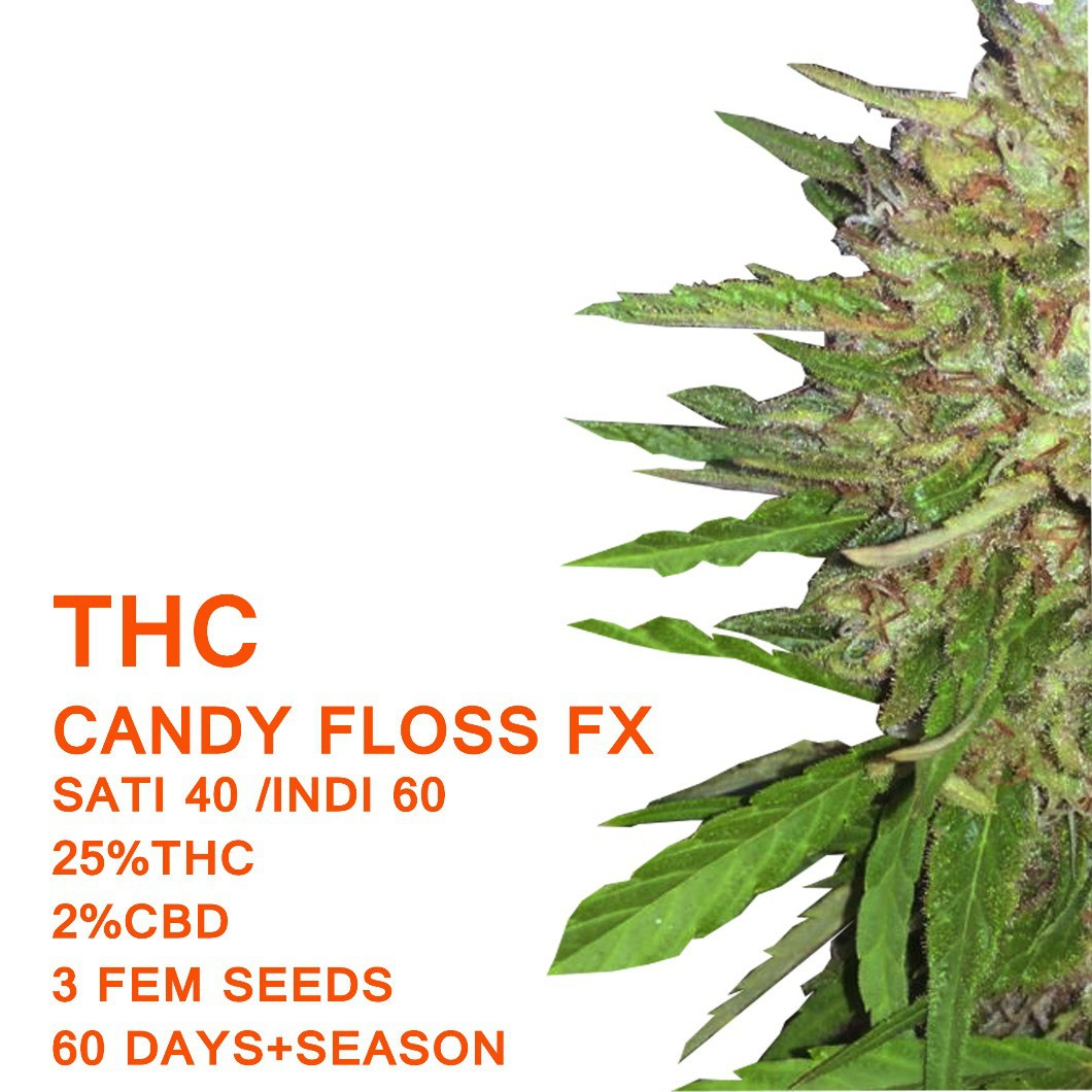 Candy Floss FX | SeedWorx Laboratories