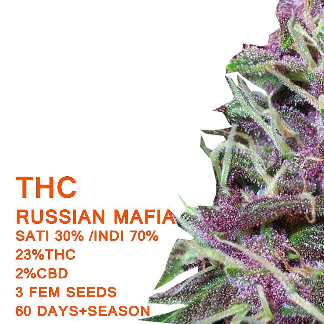 Russian Mafia - SeedWorx Laboratories