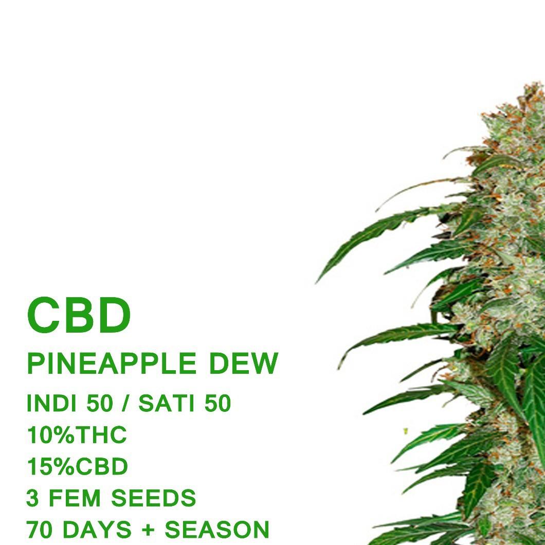 Pineapple Dew CBD - SeedWorx Laboratories
