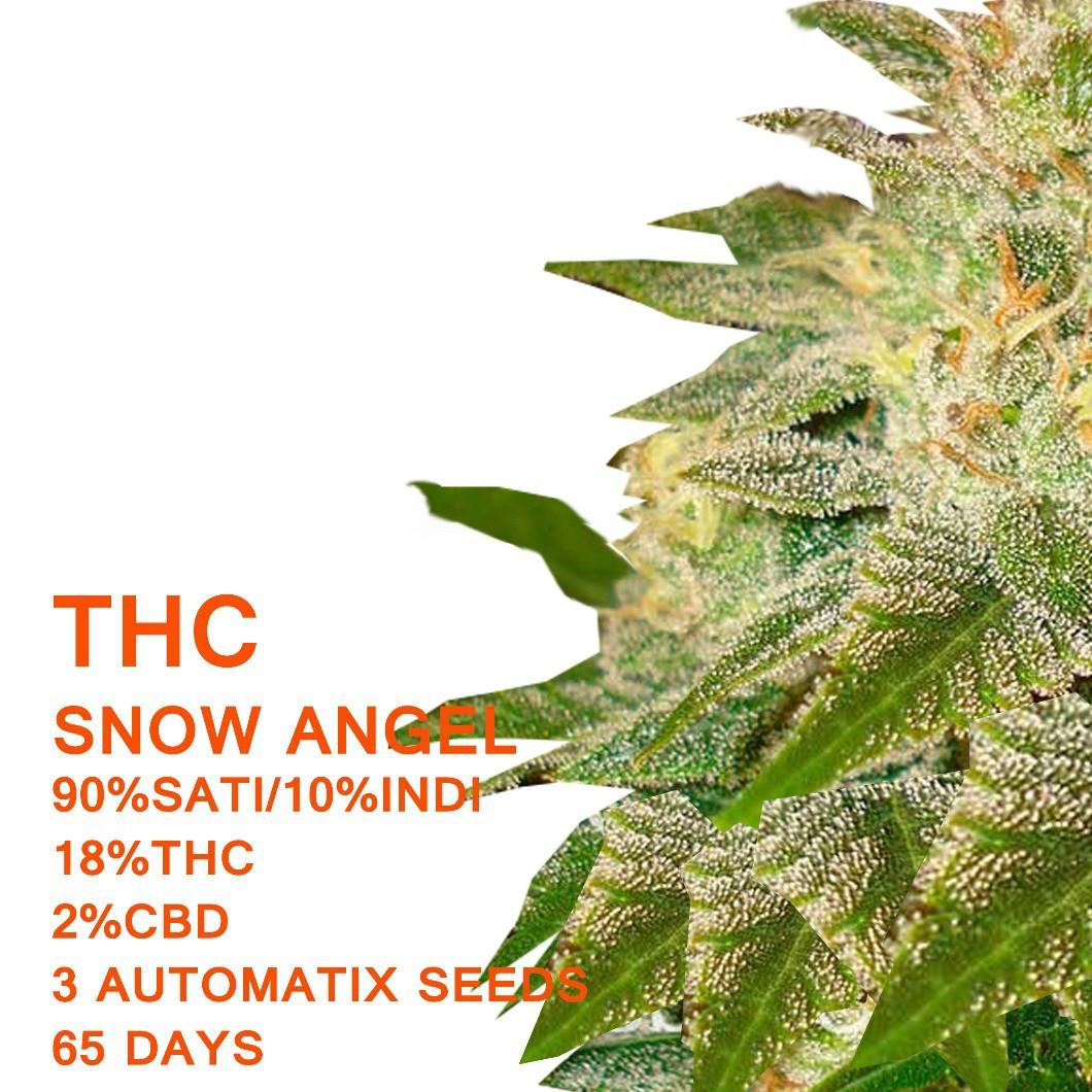 Snow Angel Auto - SeedWorx Laboratories