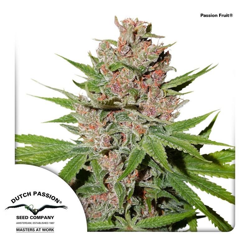 Passion Fruit | Dutch Passion - Cannabis Genetics